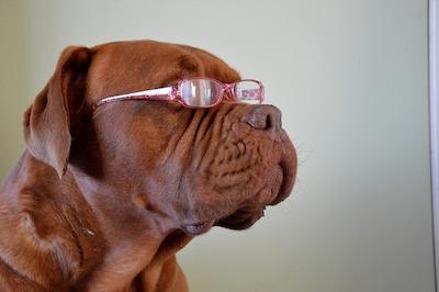 メガネをかけたワンちゃん
